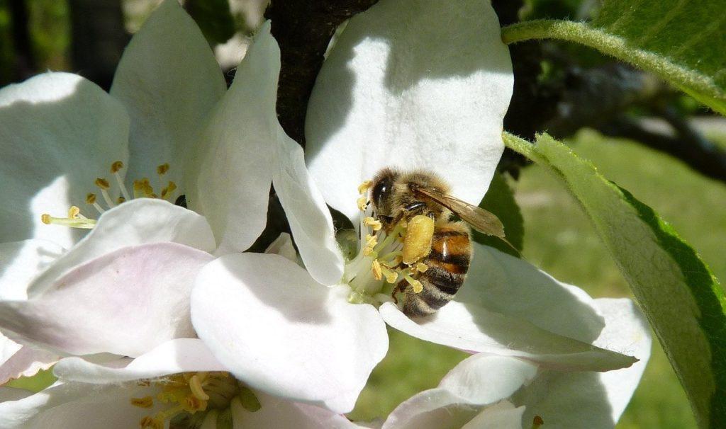 bee, pollen, legs